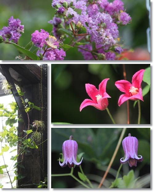 8月の庭 2