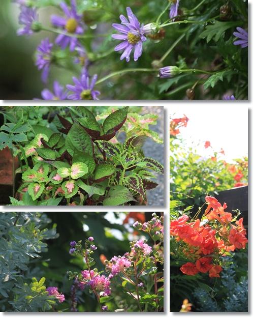 8月の庭 1