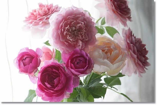 8月のバラ 切り花
