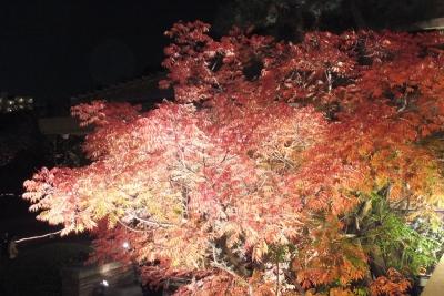 庭園のライトアップ③