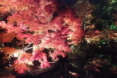 庭園のライトアップ②