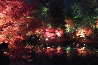 庭園のライトアップ①