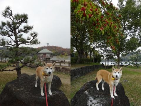 山田池公園 紅葉 日和と母と