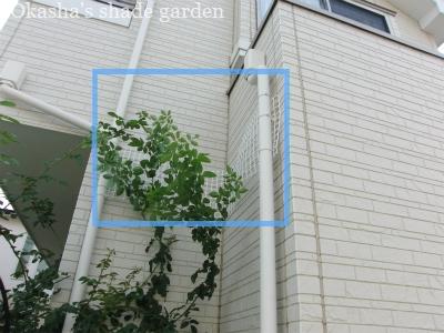 sCIMG6152.jpg