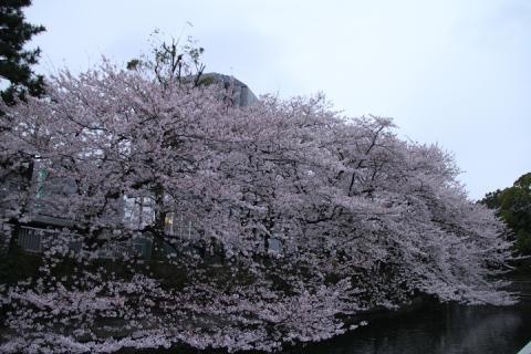 108 仙台堀川