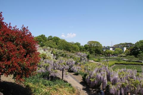 002 横須賀しょうぶ園