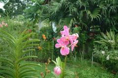 314マンダイ蘭園