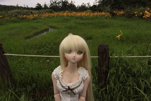 湿原を背景に