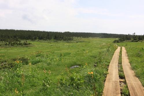 湿原の木道2