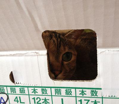 こんな箱が。。。