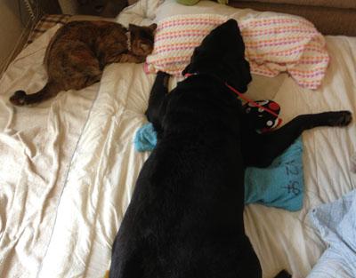 7月21日。とうたんの冷たい枕でもみもみ