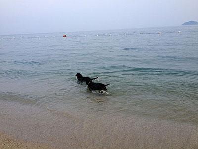 るーの,海のうー