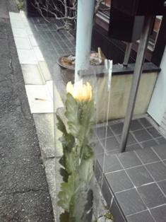 2014_01_04_京都_38