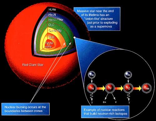赤色巨星の断面図