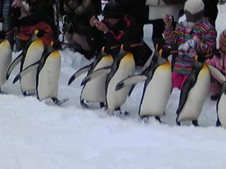 ペンギンその2