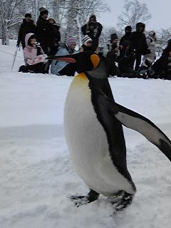 ペンギンその3