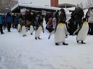 ペンギンその5