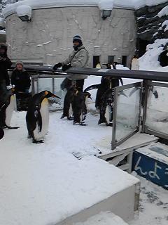 ペンギンその6