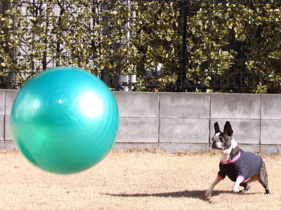2014年 今年もボールが大好きなようです