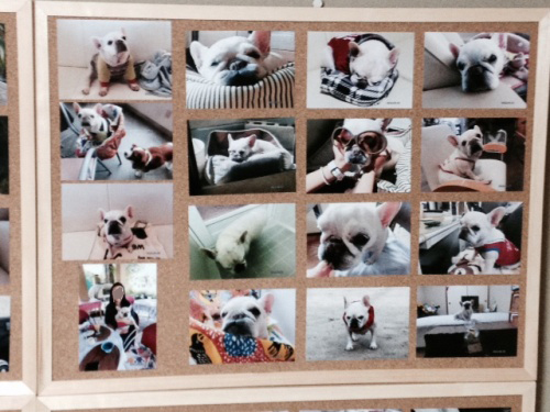 パオの写真