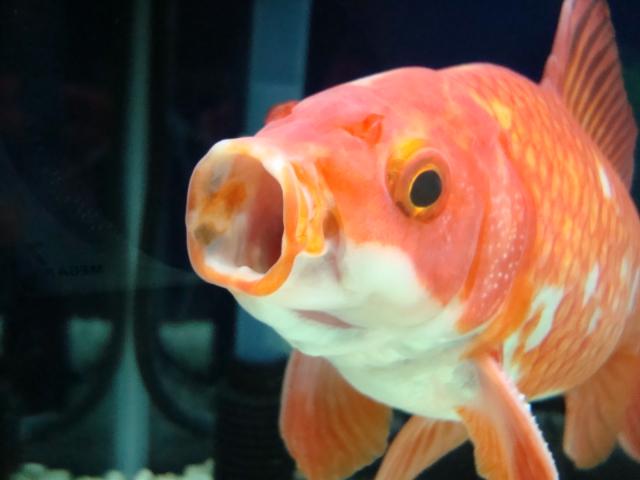 鯉のぼり?^^;