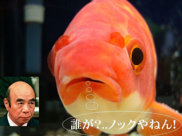 松平=ノック