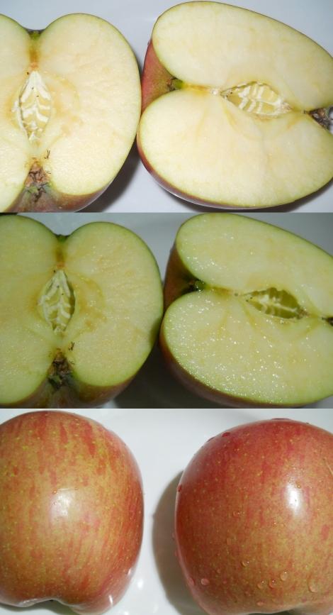 種無しリンゴ Seedless Apple