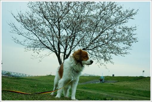 12桜とパル