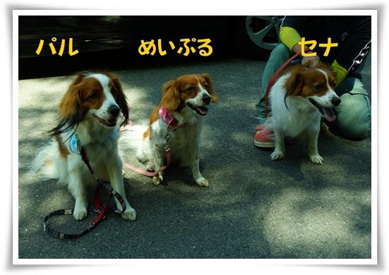 3_20130520234201.jpg