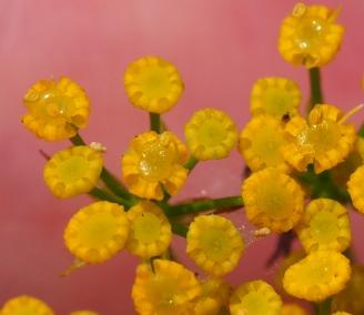 ミシマサイコ 花アップ2