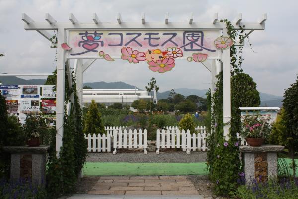 2013.09.16 亀岡コスモス園(前編)-1