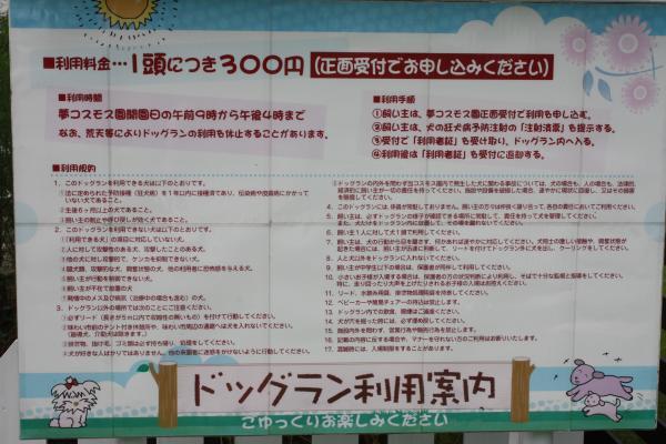 2013.09.16 亀岡コスモス園(前編)-8