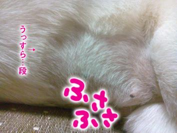 2013621non_02.jpg
