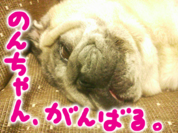 2013622non_09.jpg