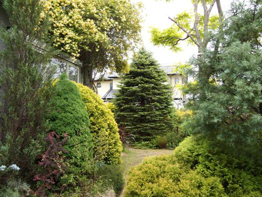 my-garden 008 (4)