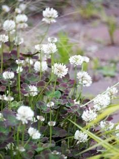 my-garden 025 (4)