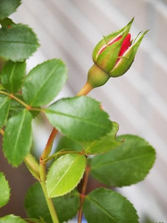 my-garden 020 (4)
