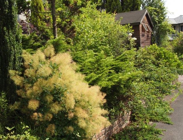 my-garden 066 (2)