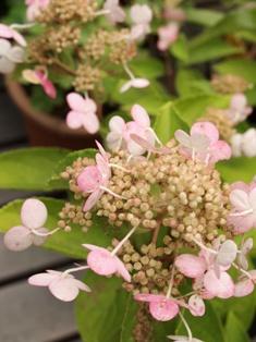 my-garden 002 (4)