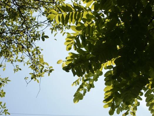 my-garden 034 (3)