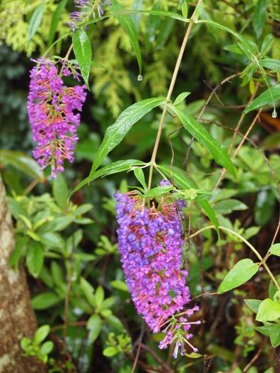 my-garden 001 (6)
