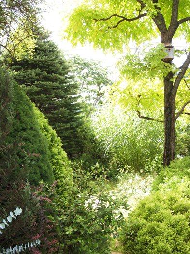 my-garden 015 (4)