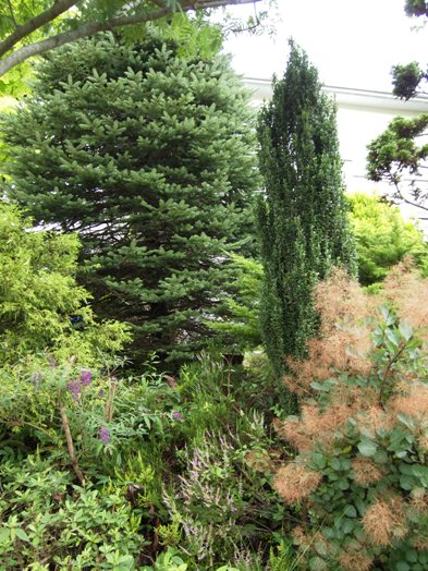 my-garden 052