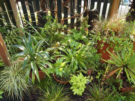my-garden 027 (3)
