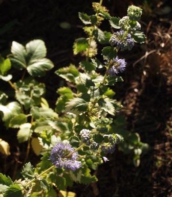 my-garden 002 (6)