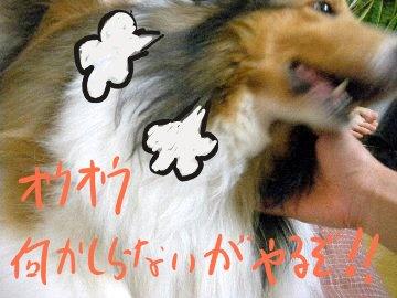 ドッグライフカウンセラーのゆるふわ飼育日記