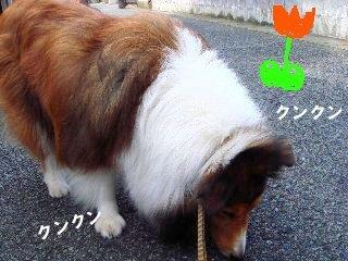 ドッグライフカウンセラーのゆるるん飼育日記
