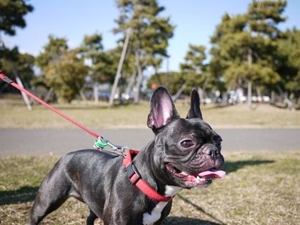 ドッグライフカウンセラー ゆるるん飼育-azu40