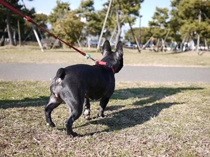 ドッグライフカウンセラー ゆるるん飼育-azu74