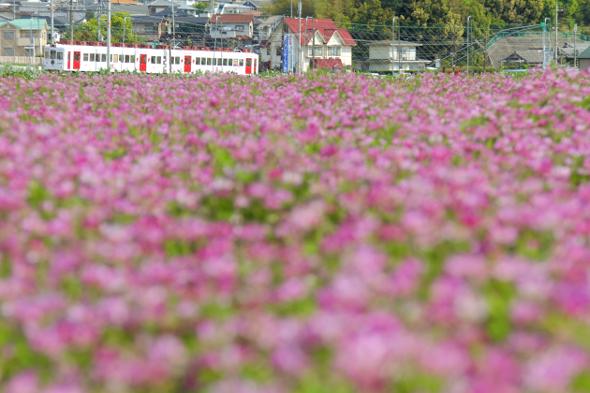2013/4/27 和歌山電鐵貴志川線 大池遊園~西山口